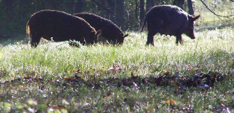 Hogs-and-Varmint-SLIDER