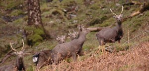Sika-stags-SLIDER-wp