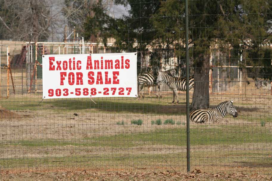 Exotic-animals